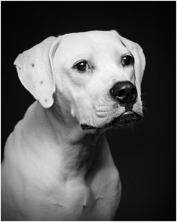 Poughkeepsie Dog Portraits